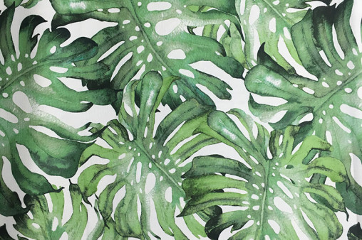 Magic Forest Monstera 11